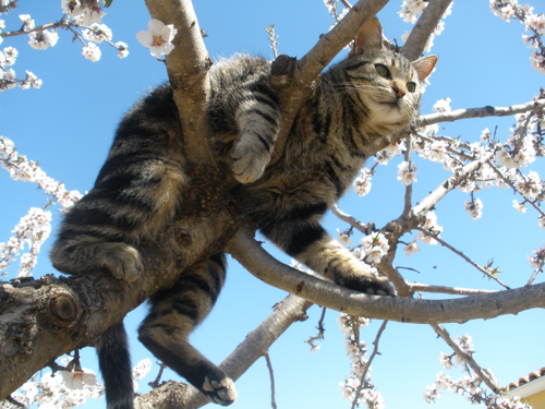property investing - many ways to skin a cat